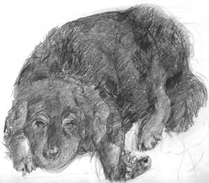 Kleo. pencil sketch of dog
